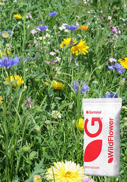 WFG2 Flowering Meadow
