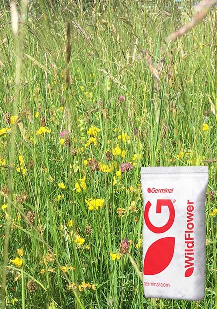 RE2 Lowland Meadow (MG9 Grassland)