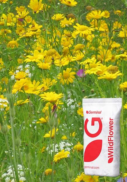 WF1 Flowering Meadow