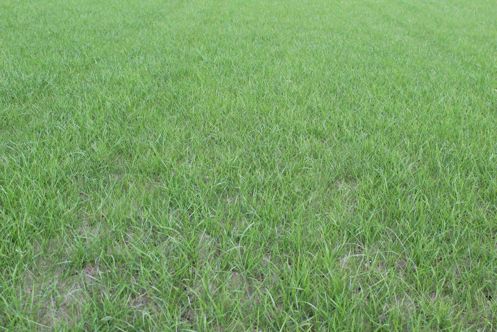 pre-seed fertiliser