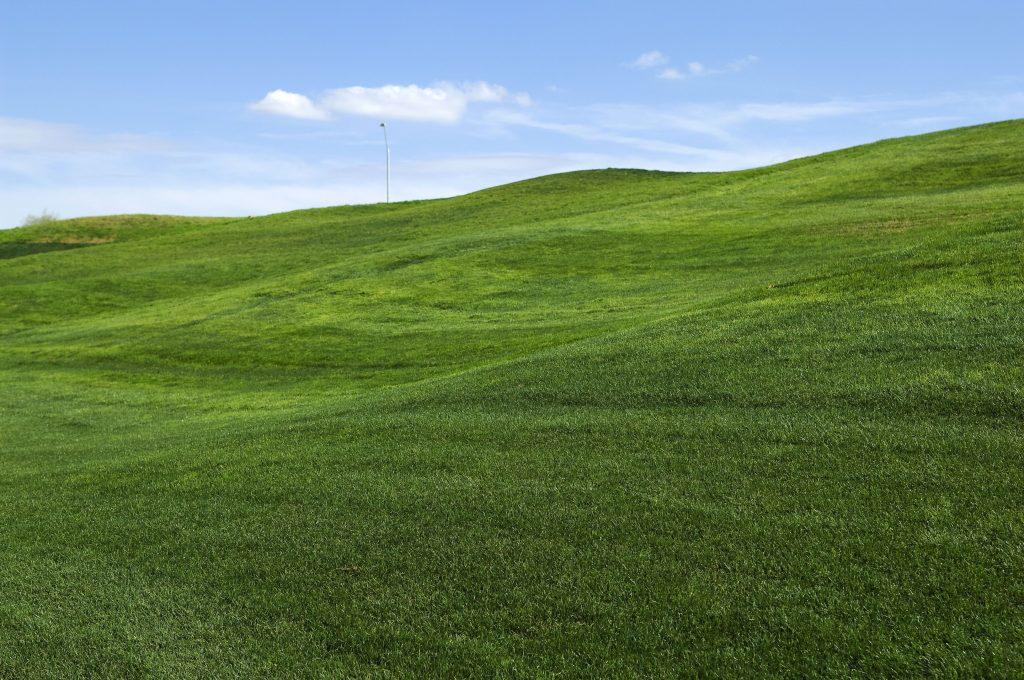 Establishing grass on a verge